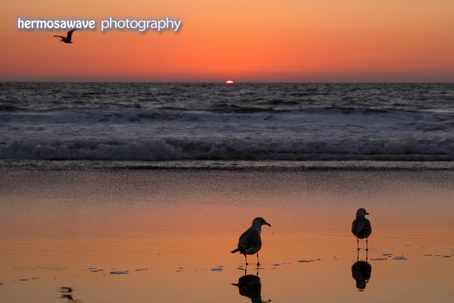 Sunset with Seagulls