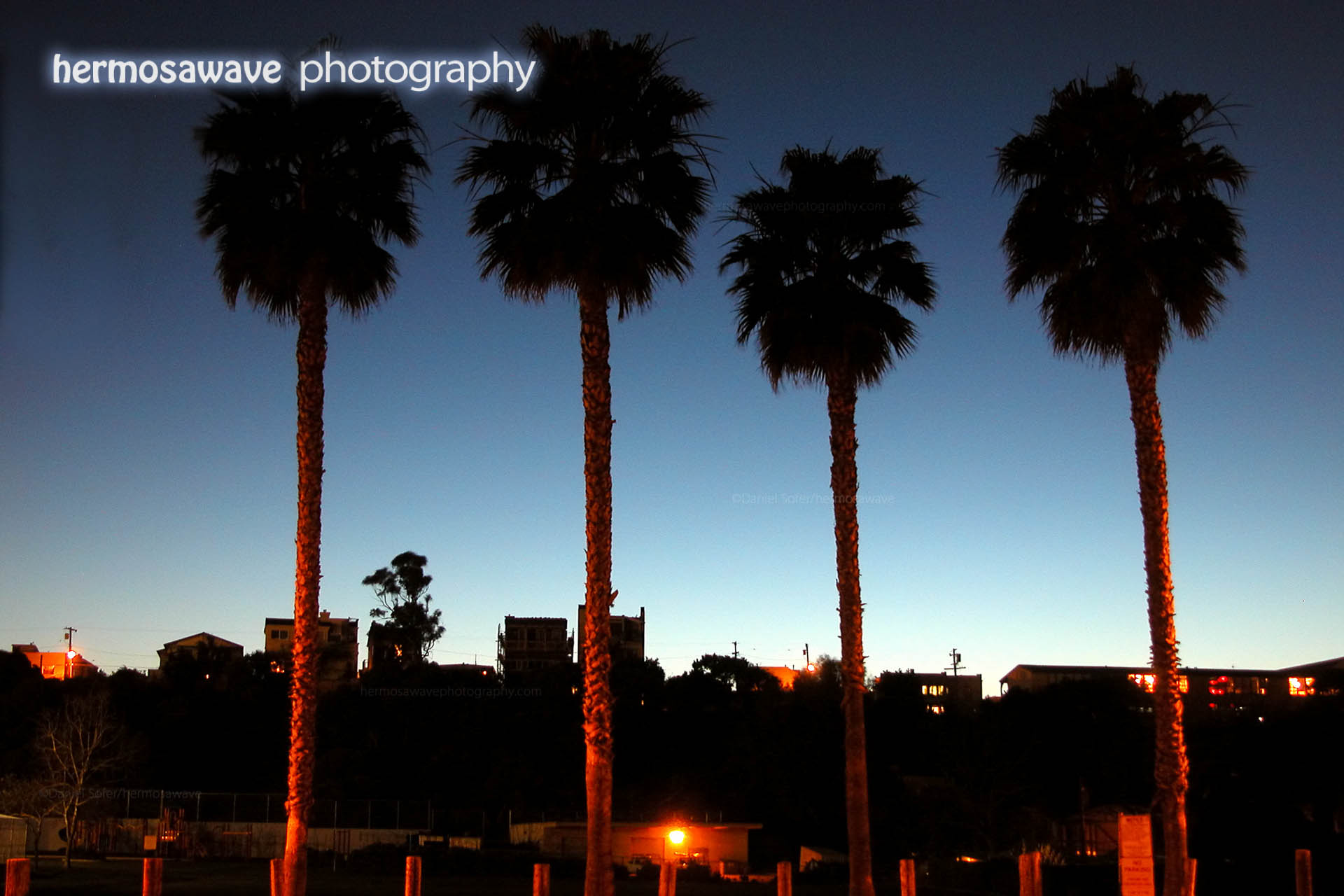 Hermosa Valley Palms