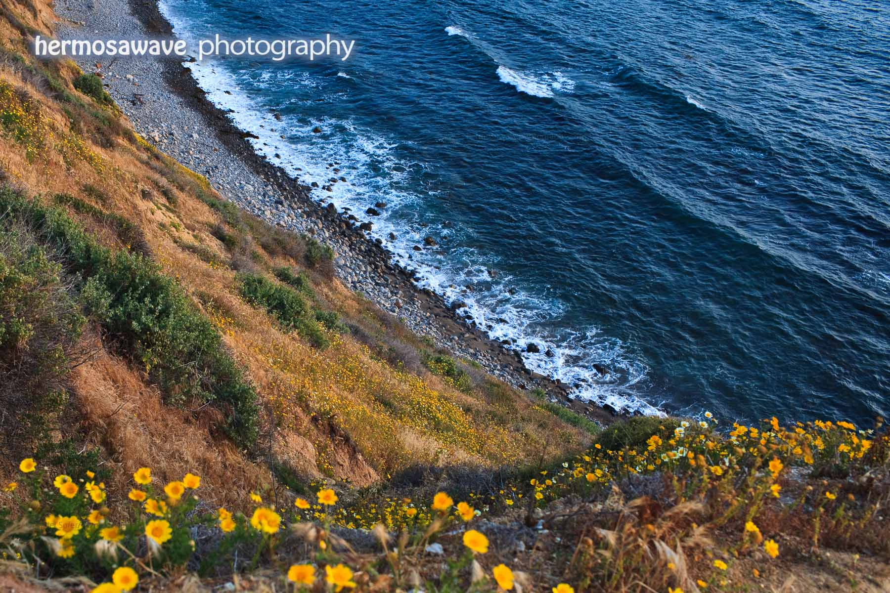 Daisies on the Bluff