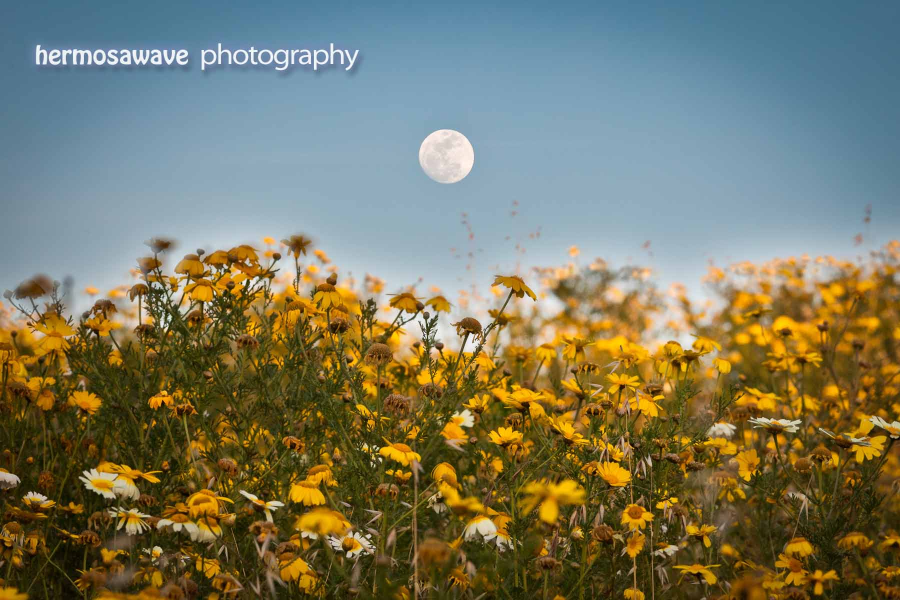 Moon Over Wildflowers