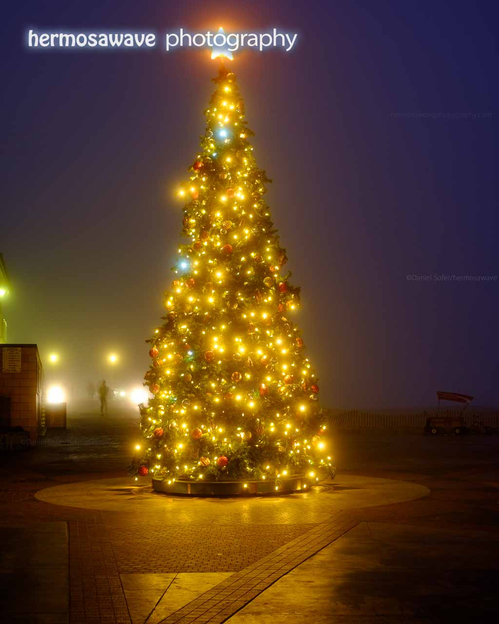 Christmas Tree in the Fog