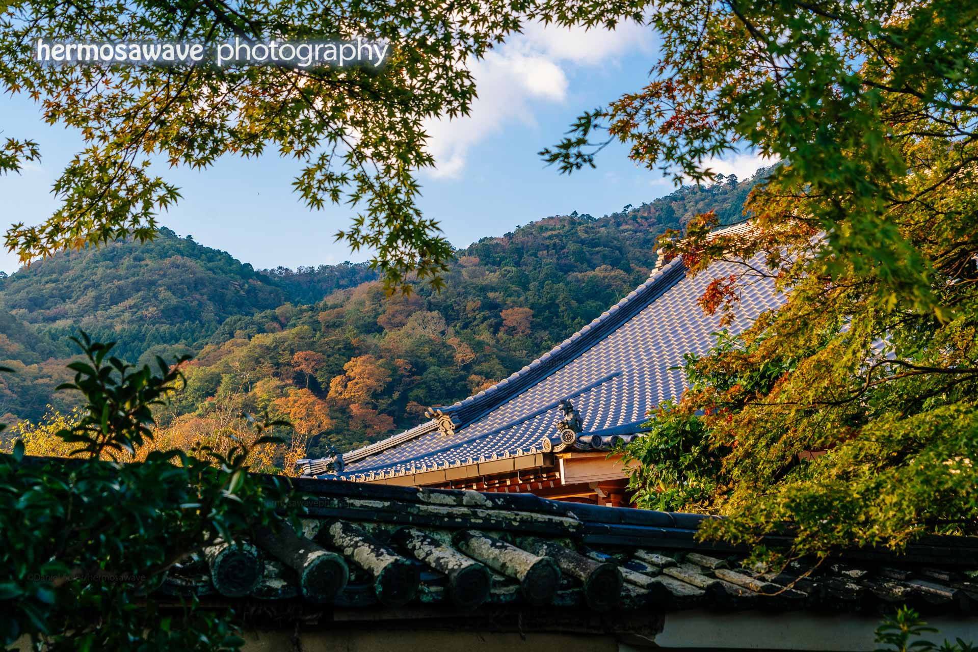 Autumn Morning in Arashiyama