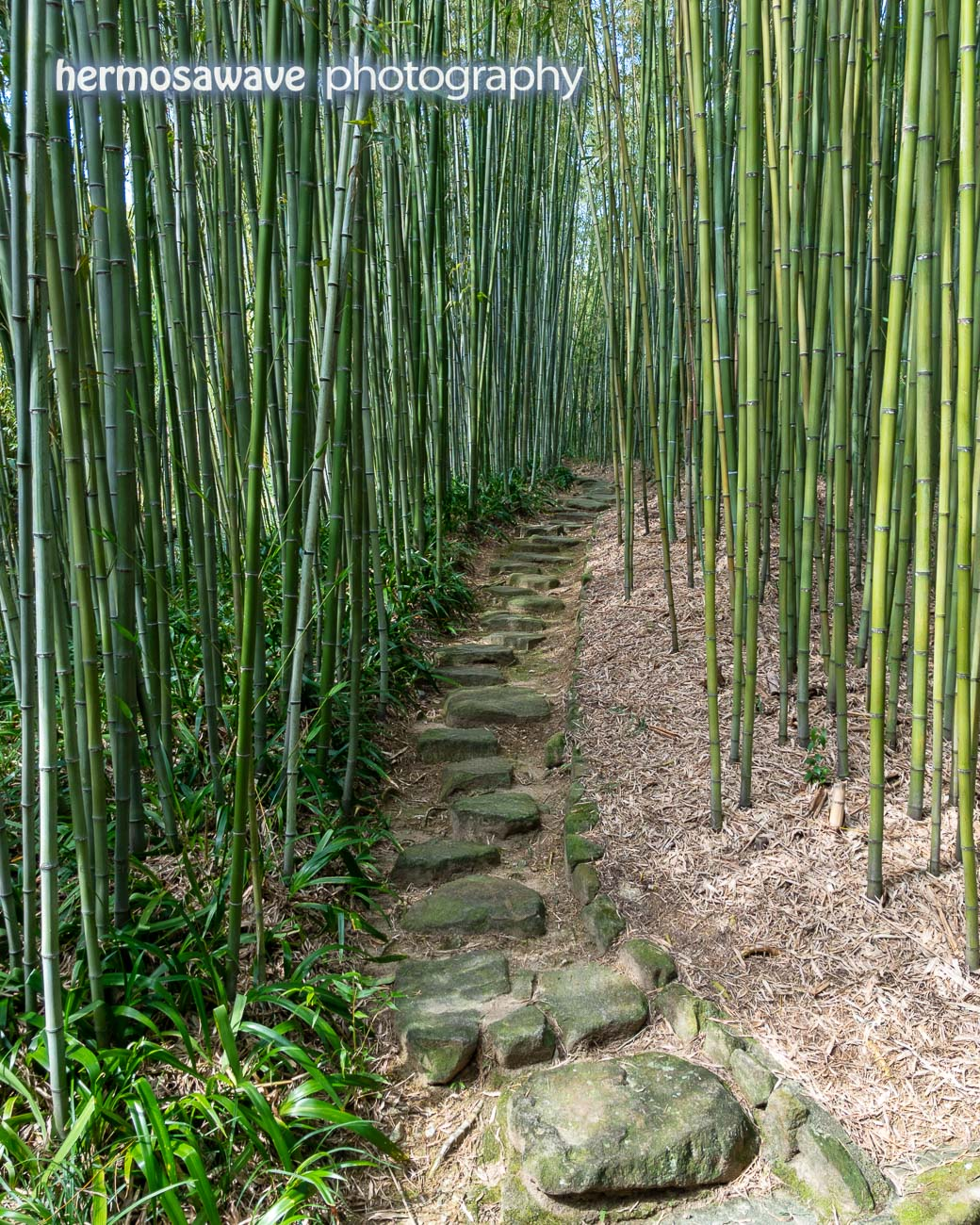 Another Bamboo Path