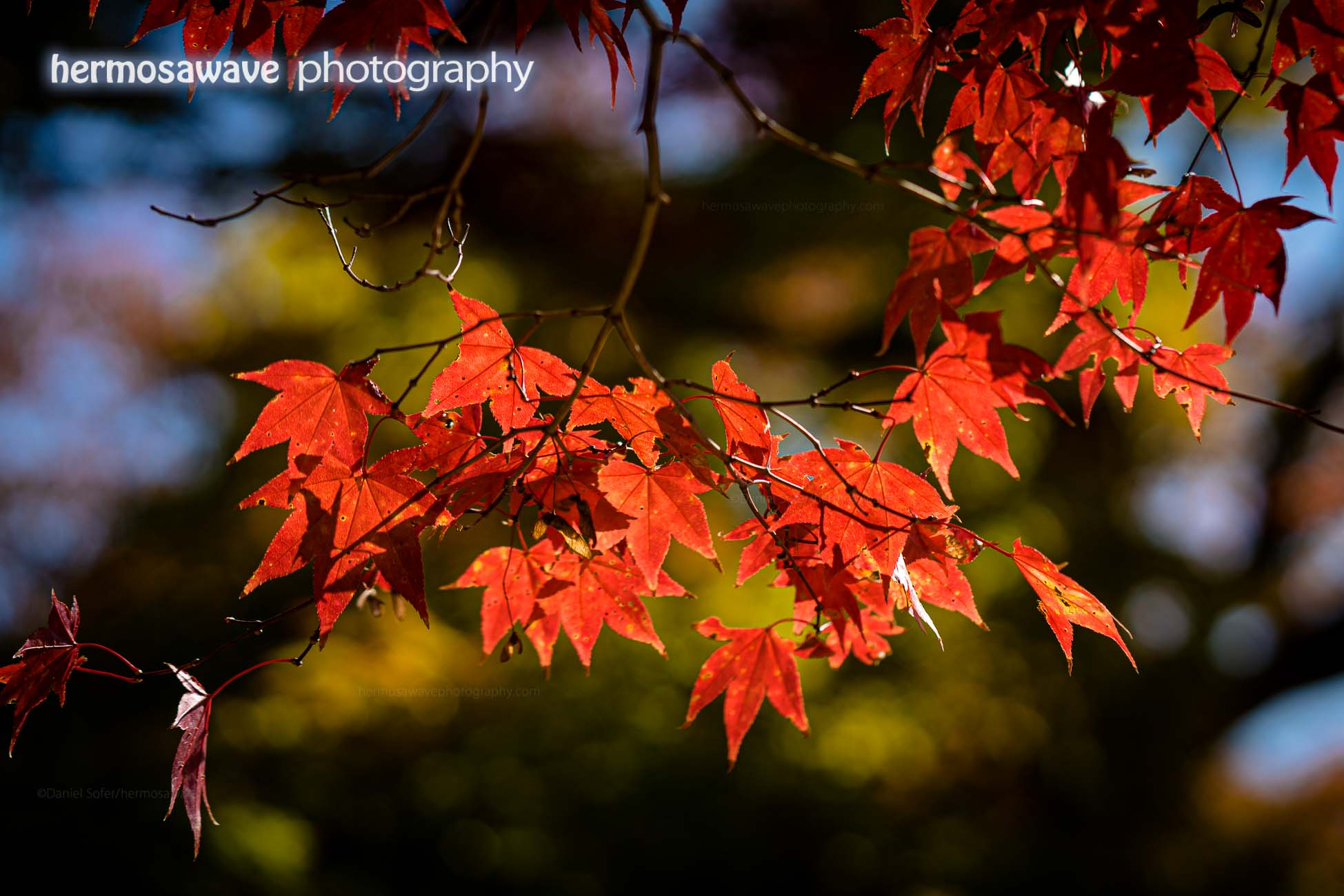 Red Leaves at Jingo-ji・ 神護寺の紅葉