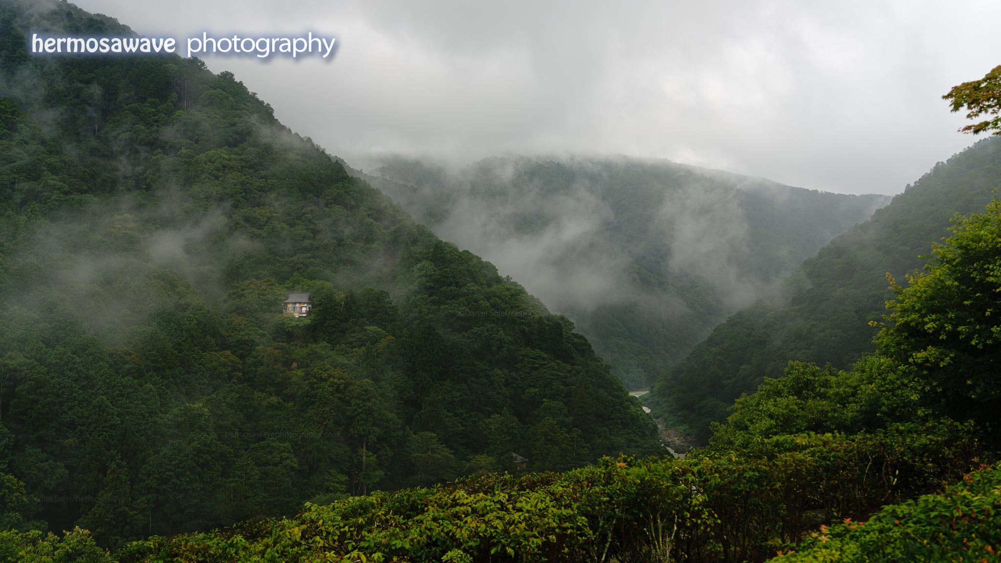 Fog in the Mountains・ 山の霧