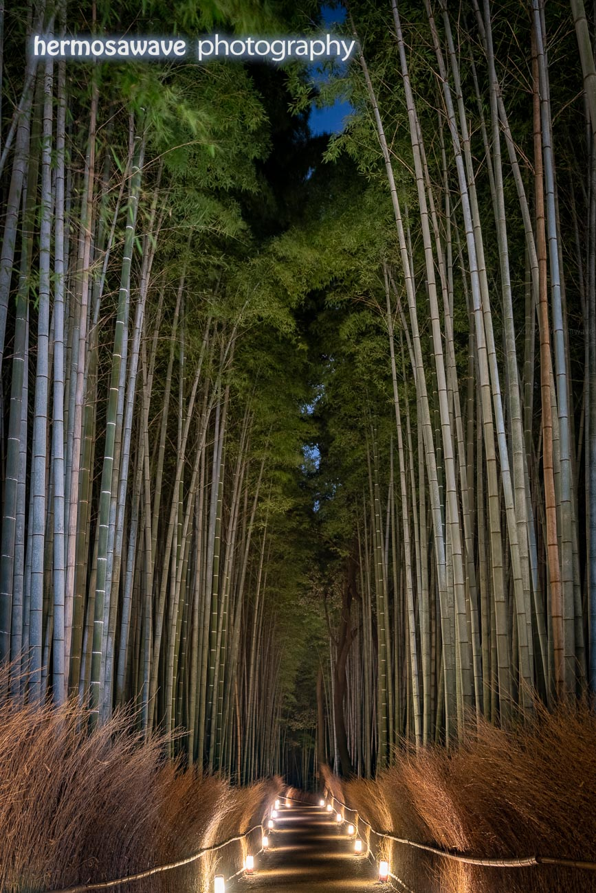 Bamboo Grove at Night・夜の竹林